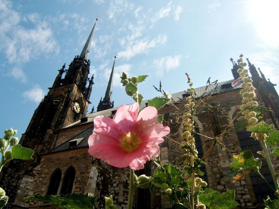 Katedrála svatého Petra a Pavla – fotky fanoušků